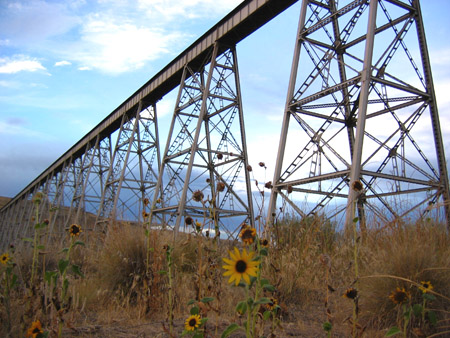 train_bridge_sunflowers_1