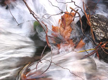 Water_leaves_slow