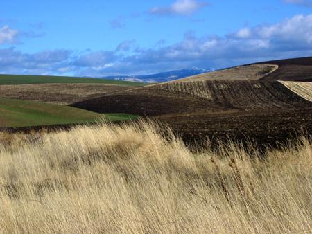 Fields_hills